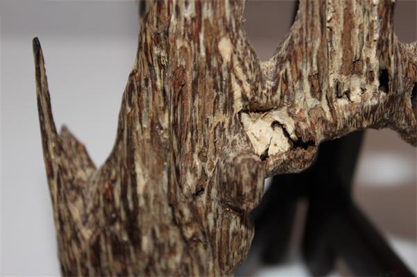 蚁沉是什么意思?和虫漏是什么关系?